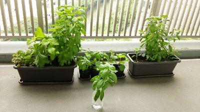 家庭菜園や植物を育てること